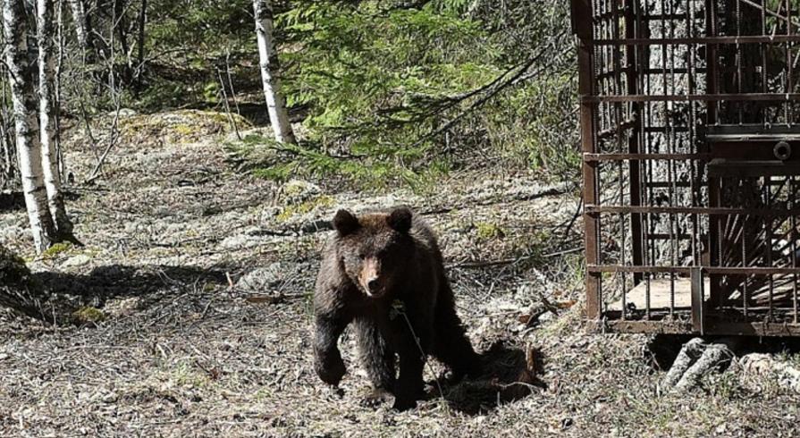медвежонка отпустили