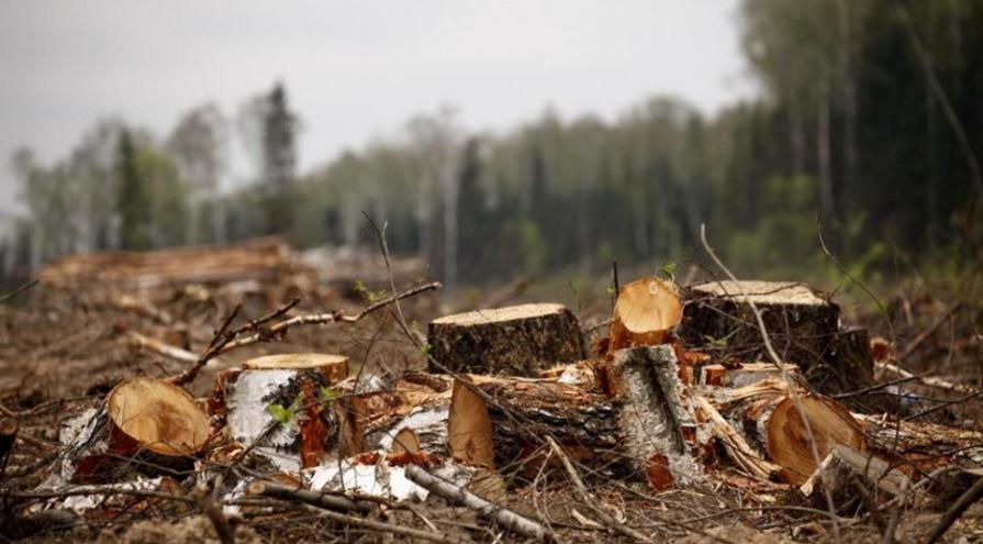 вырубил лес на 6 млн