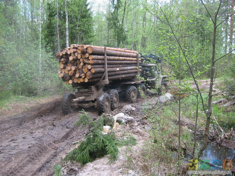 штрафы лес