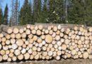 В Кировской области упрощена процедура купли-продажи леса на аукционах