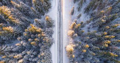 Северные лесные ресурсы Кировской области хотят отдать только под крупные проекты