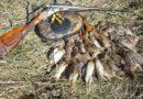Утверждено разделение охотугодий Кировской области на северные и южные территории