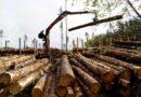 В Кировской области неформальная занятость в лесозаготовке снизилась на 40%