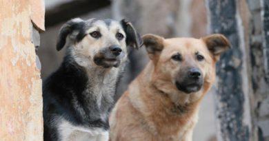 В Подосиновском районе пройдут мероприятия по отлову безнадзорных животных