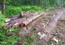 В Подосиновском районе осужден мужчина за незаконную рубку 7 деревьев
