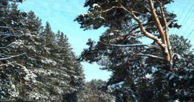 На развитие лесного хозяйства Кировской области направят 14,7 млрд рублей
