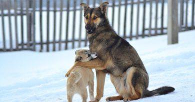 В Подосиновском районе прошел рейд по соблюдению гражданами правил содержания собак