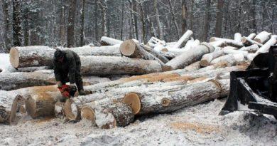 В Опаринском районе осуждённый лесоруб возместил ущерб на сумму более 2 млн рублей